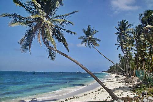 Coconut Palms on the Beach
