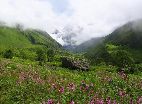 El Valle de las Flores en India