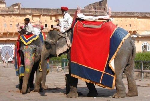 Fuerte Amber en elefante