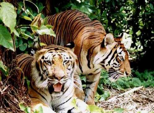 Parque Nacional Ranthambhor, naturaleza salvaje