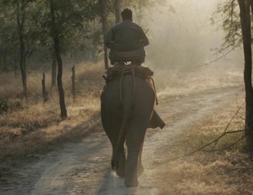 Safari en Elefante
