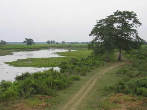 Parque Kaziranga