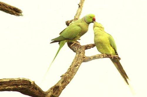 El santuario de aves de Bharatpur