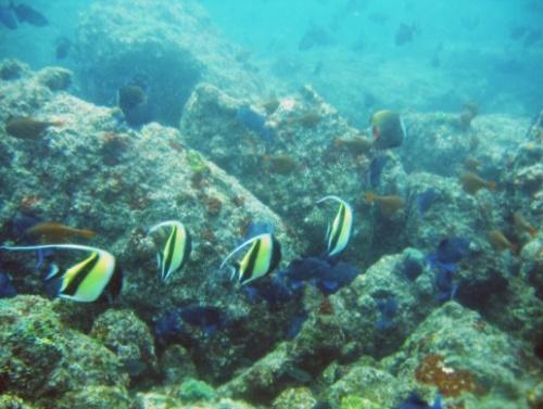 La isla Netrani, naturaleza en el mar arábigo