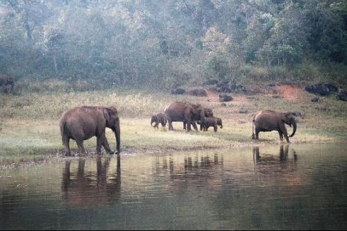 El Santuario de Vida Silvestre Periyar