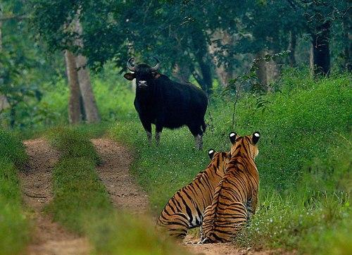 Santuario natural Shivaram