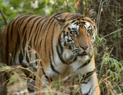 Parque Nacional Bandhavgarh
