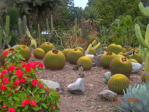 panchkula y el jardin de cactus