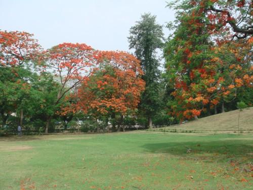 Jardín Talkatora, un prisma de luz en Delhi
