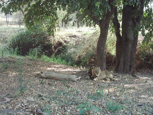 Safari Vasona
