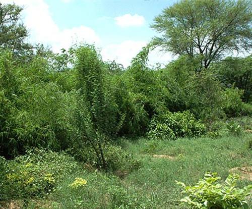 Dos jardines de mariposas en Delhi