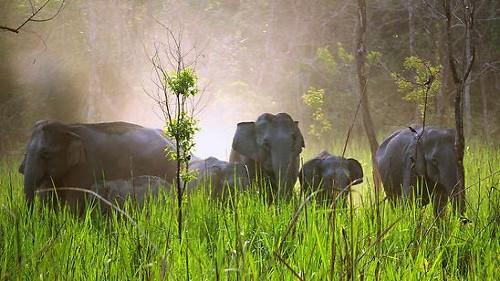 Parque Nacional de Manas