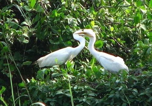 Reserva Kumarakom
